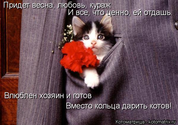 Котоматрица: Придет весна, любовь, кураж И все, что ценно, ей отдашь. Влюблен хозяин и готов Вместо кольца дарить котов!
