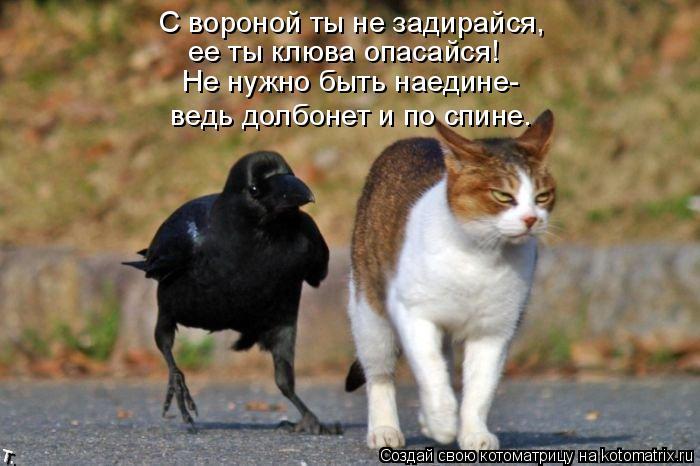 Котоматрица: С вороной ты не задирайся, ее ты клюва опасайся! Не нужно быть наедине- ведь долбонет и по спине.