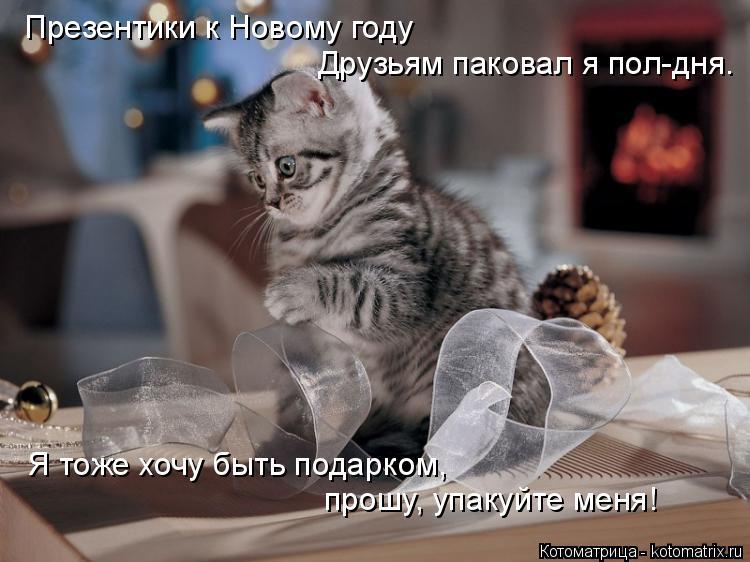 Котоматрица: Презентики к Новому году Друзьям паковал я пол-дня. Я тоже хочу быть подарком, прошу, упакуйте меня!
