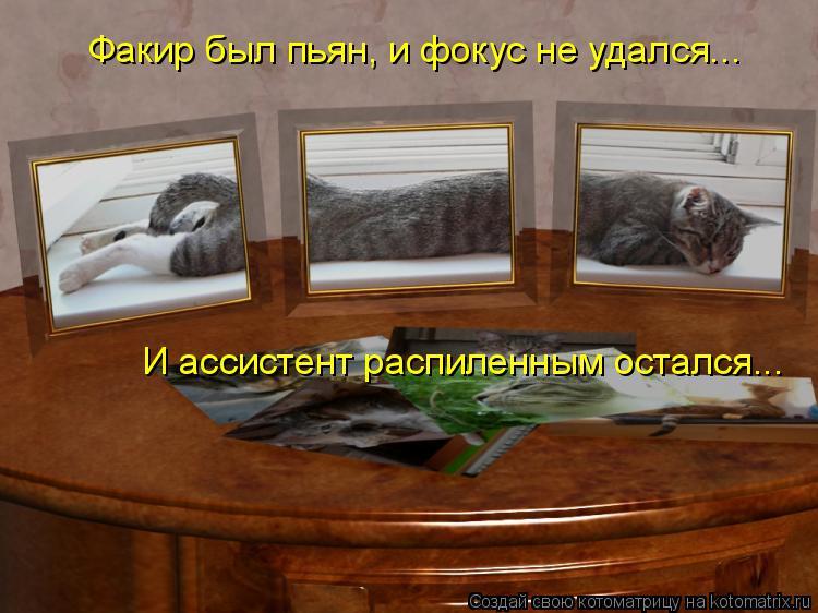 Котоматрица: Факир был пьян, и фокус не удался... И ассистент распиленным остался...