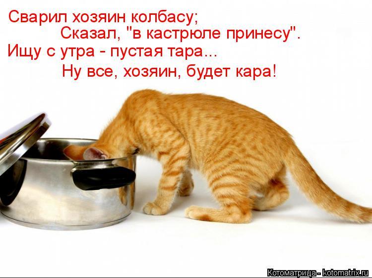 """Котоматрица: Сварил хозяин колбасу; Сказал, """"в кастрюле принесу"""". Ищу с утра - пустая тара... Ну все, хозяин, будет кара!"""