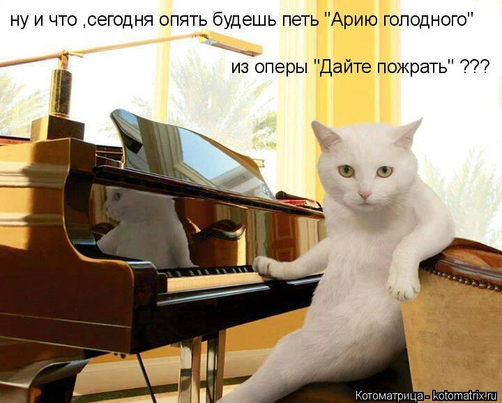 """Котоматрица: ну и что ,сегодня опять будешь петь """"Арию голодного"""" из оперы """"Дайте пожрать"""" ???"""