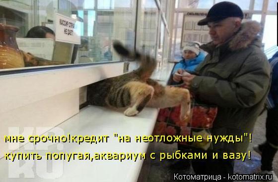 """Котоматрица: мне срочно!кредит """"на неотложные нужды""""! купить попугая,аквариум с рыбками и вазу!"""
