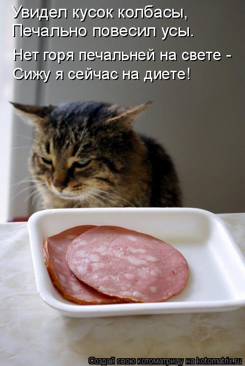 Котоматрица: Увидел кусок колбасы, Печально повесил усы. Нет горя печальней на свете - Сижу я сейчас на диете!