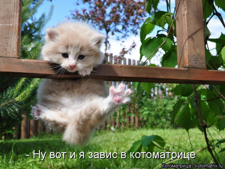 Котоматрица: - Ну вот и я завис в котоматрице