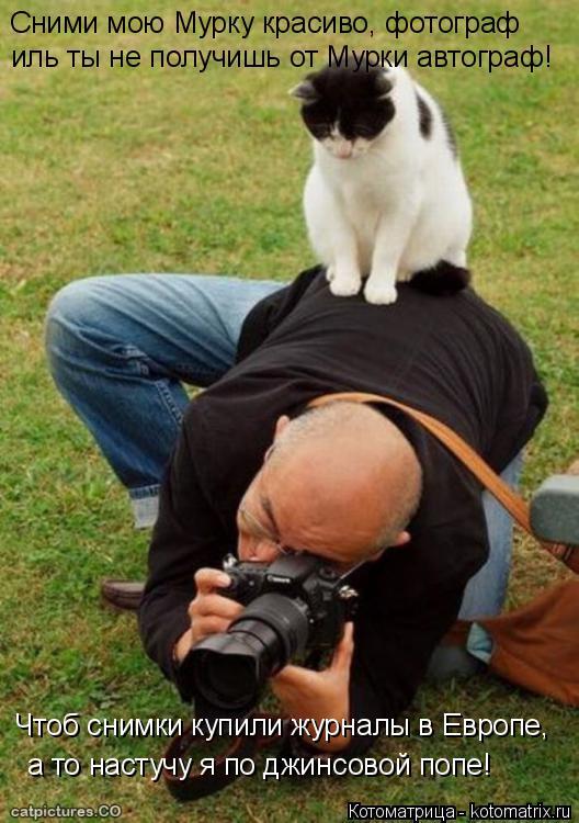 Котоматрица: Сними мою Мурку красиво, фотограф иль ты не получишь от Мурки автограф! Чтоб снимки купили журналы в Европе, а то настучу я по джинсовой попе