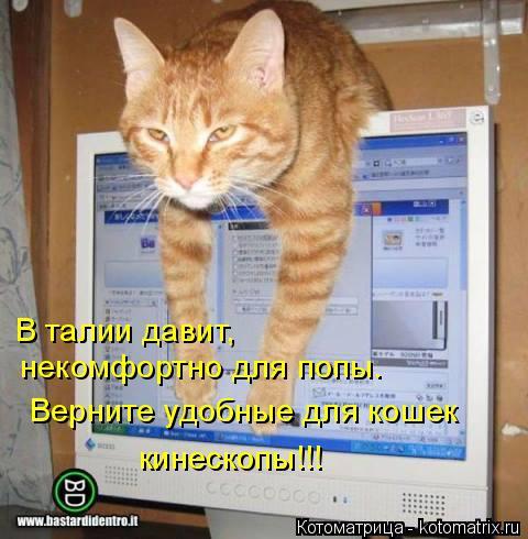 Котоматрица: В талии давит,   некомфортно для попы. Верните удобные для кошек кинескопы!!!
