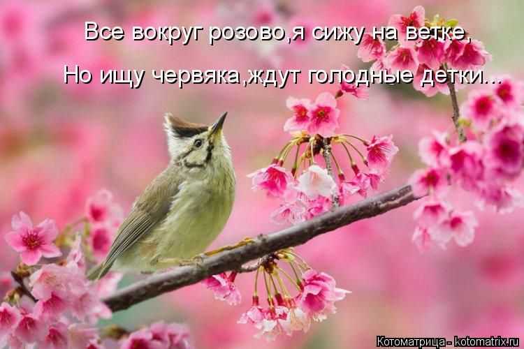 Котоматрица: Все вокруг розово,я сижу на ветке, Но ищу червяка,ждут голодные детки...