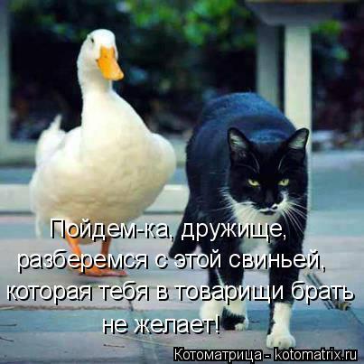Котоматрица: Пойдем-ка, дружище, разберемся с этой свиньей, которая тебя в товарищи брать не желает!