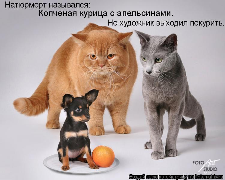 Котоматрица: Натюрморт назывался:  Копченая курица с апельсинами. Но художник выходил покурить.