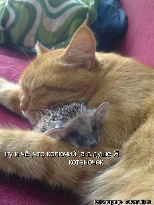 Котоматрица: ну и чё ,что колючий ,а в душе Я  котеночек...