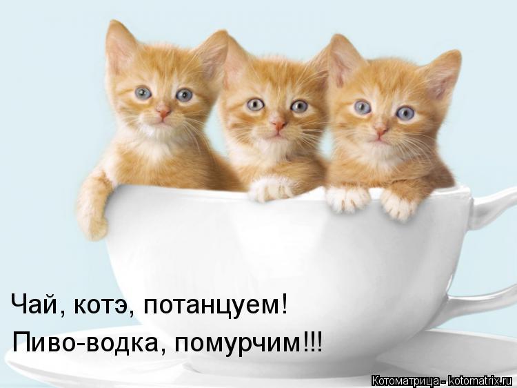 Котоматрица: Чай, котэ, потанцуем! Пиво-водка, помурчим!!!