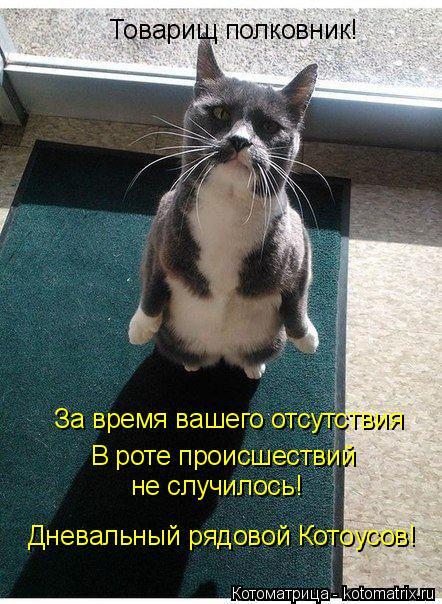 http://kotomatrix.ru/images/lolz/2014/07/11/kotomatritsa_f.jpg