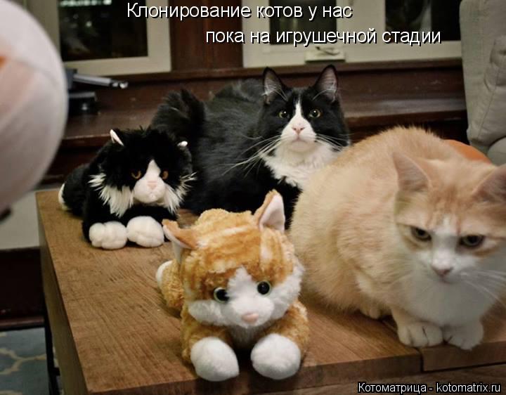 Котоматрица: Клонирование котов у нас  пока на игрушечной стадии