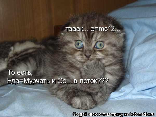 Котоматрица: тааак... e=mc^2... То есть, Еда=Мурчать и Сс... в лоток???