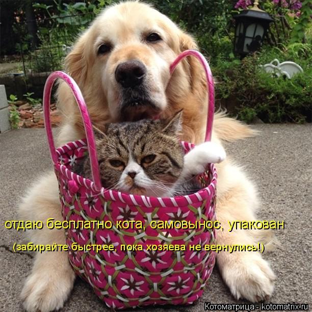 Котоматрица: отдаю бесплатно кота, самовынос, упакован (забирайте быстрее, пока хозяева не вернулись!)