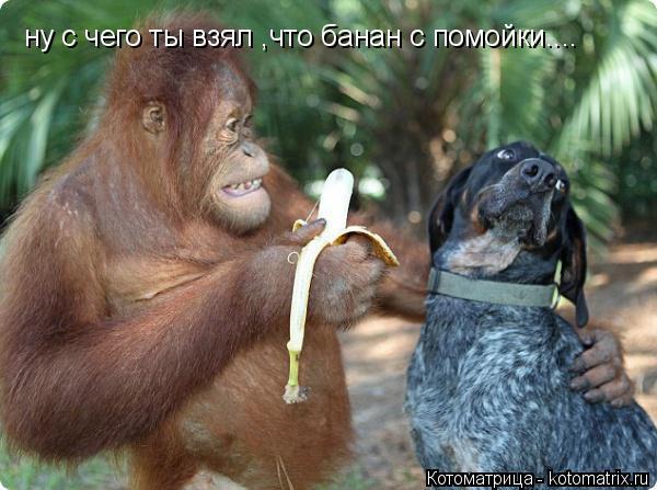 Котоматрица: ну с чего ты взял ,что банан с помойки....