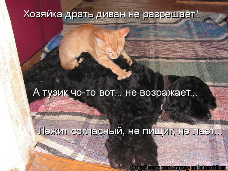 Котоматрица: Хозяйка драть диван не разрешает! А тузик чо-то вот... не возражает... Лежит согласный, не пищит, не лает...