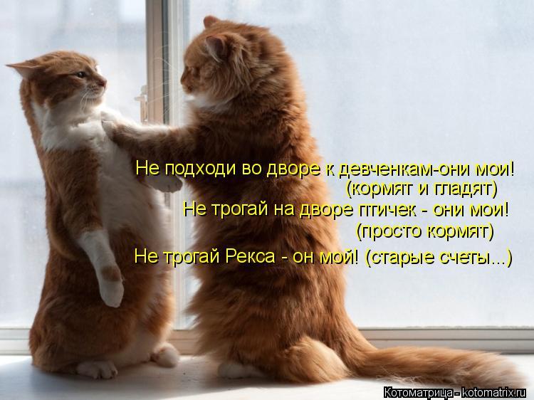 Котоматрица: Не подходи во дворе к девченкам-они мои! (кормят и гладят) Не трогай на дворе птичек - они мои! (просто кормят) Не трогай Рекса - он мой! (старые