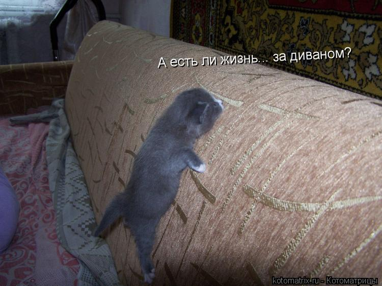 Котоматрица: А есть ли жизнь... за диваном?