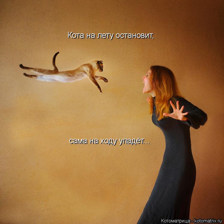 Котоматрица: Кота на лету остановит, сама на ходу упадёт...