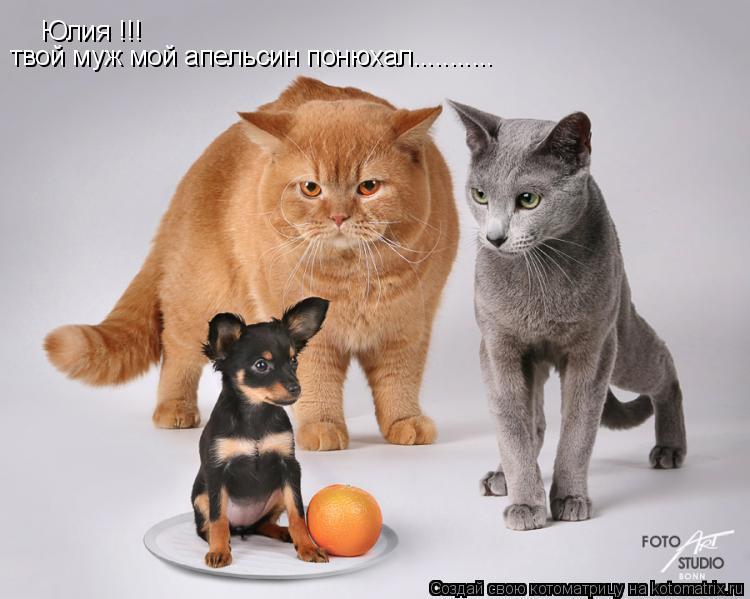 Котоматрица: Юлия !!! твой муж мой апельсин понюхал...........