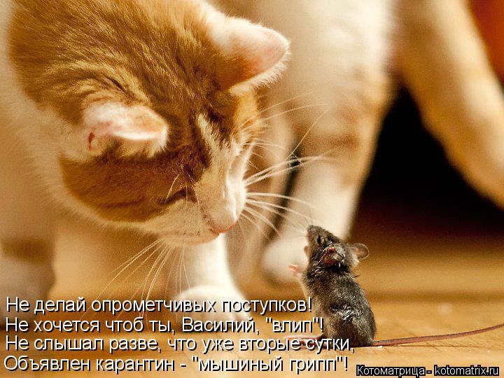 """Котоматрица: Не делай опрометчивых поступков! Не хочется чтоб ты, Василий, """"влип""""! Не слышал разве, что уже вторые сутки, Объявлен карантин - """"мышиный грипп"""
