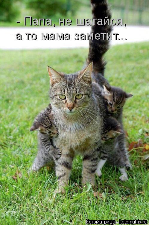 Котоматрица: - Папа, не шатайся,  а то мама заметит...
