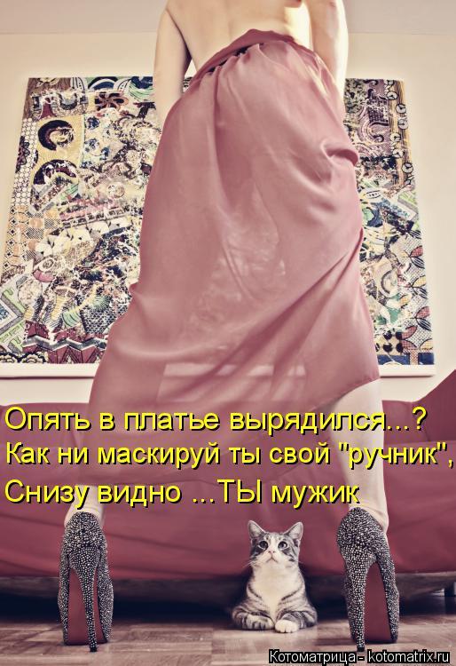 """Котоматрица: Опять в платье вырядился...? Как ни маскируй ты свой """"ручник"""", Снизу видно ...ТЫ мужик"""