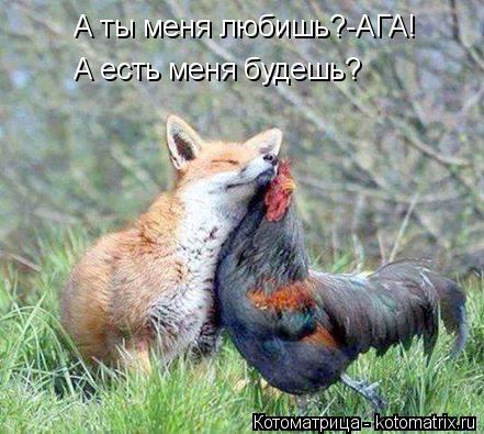 Котоматрица: А ты меня любишь?-АГА! А есть меня будешь?