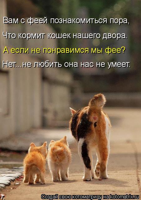 Котоматрица: Вам с феей познакомиться пора, Что кормит кошек нашего двора. А если не понравимся мы фее? Нет...не любить она нас не умеет.