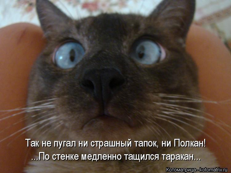 Котоматрица: Так не пугал ни страшный тапок, ни Полкан! ...По стенке медленно тащился таракан...