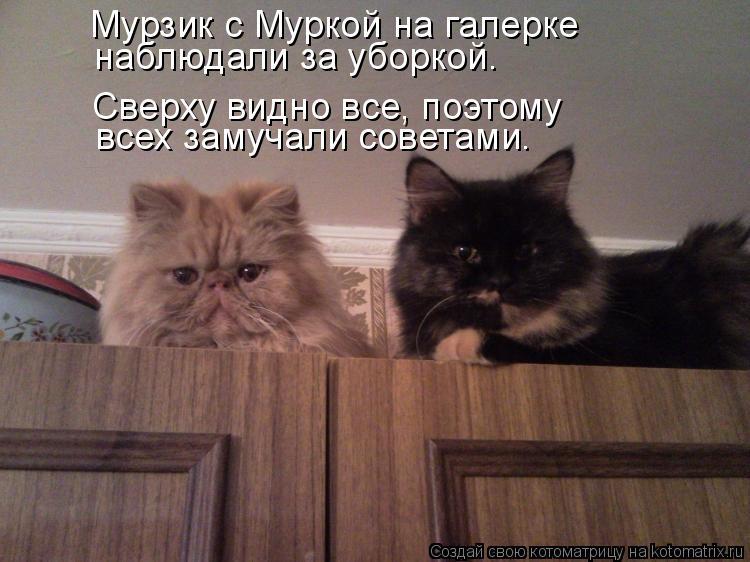 Котоматрица: Мурзик с Муркой на галерке наблюдали за уборкой. Сверху видно все, поэтому всех замучали советами.