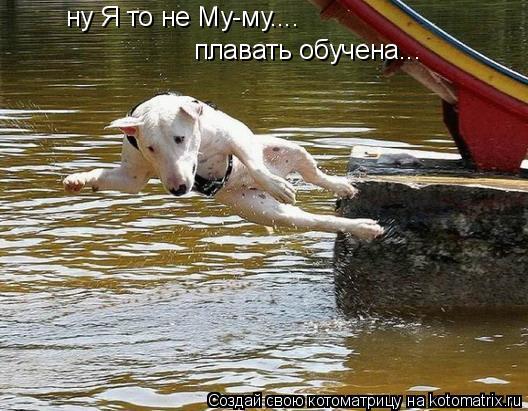 Котоматрица: ну Я то не Му-му.... плавать обучена...