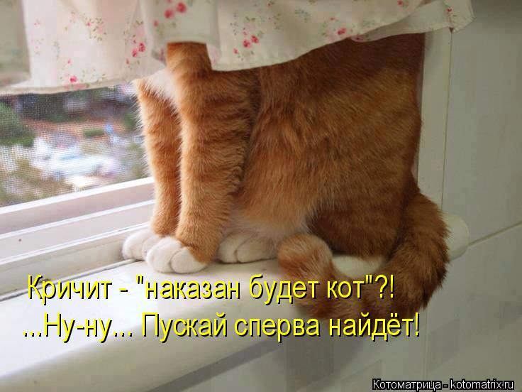 """Котоматрица: Кричит - """"наказан будет кот""""?! ...Ну-ну... Пускай сперва найдёт!"""