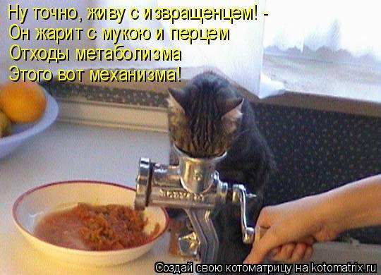 Котоматрица: Ну точно, живу с извращенцем! - Он жарит с мукою и перцем Отходы метаболизма Этого вот механизма!