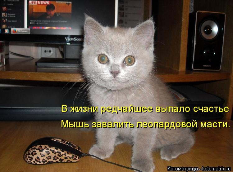 Котоматрица: В жизни редчайшее выпало счастье Мышь завалить леопардовой масти.