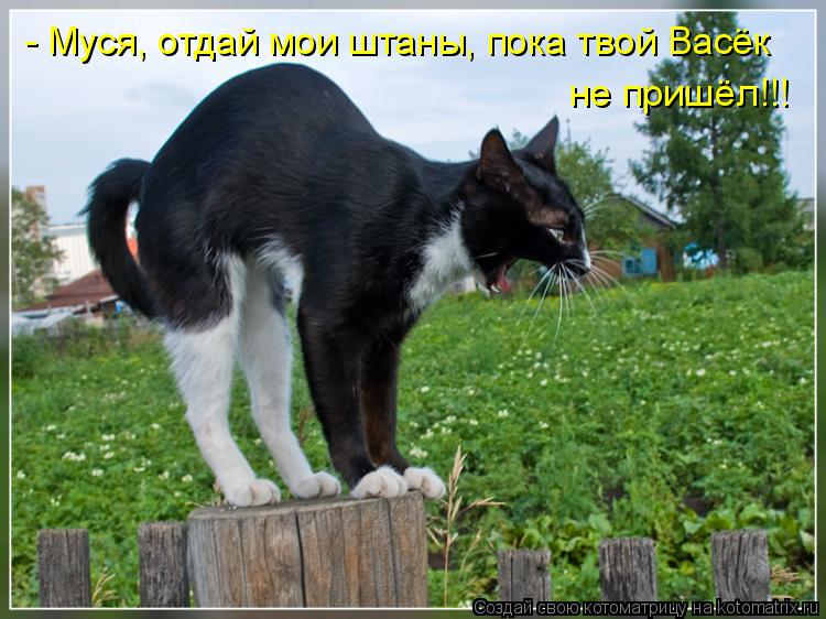 Котоматрица: - Муся, отдай мои штаны, пока твой Васёк не пришёл!!!