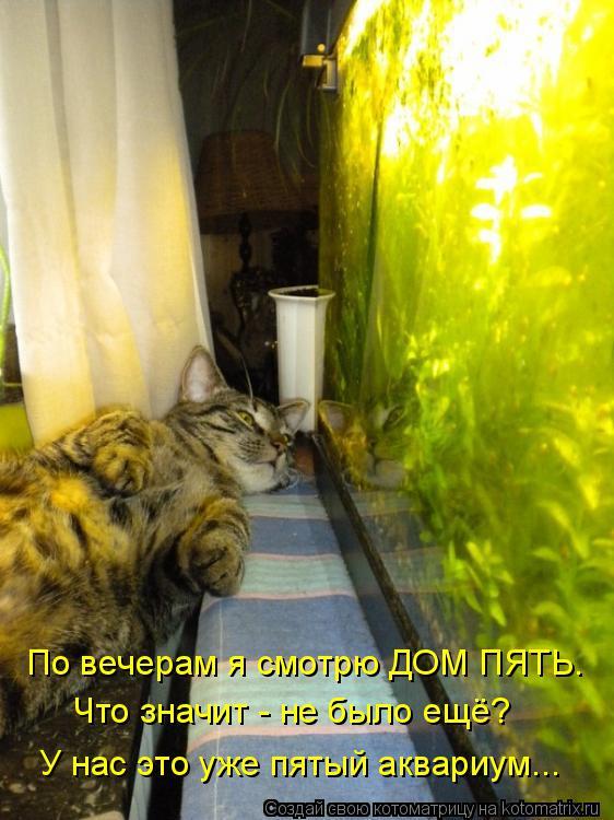 Котоматрица: По вечерам я смотрю ДОМ ПЯТЬ. Что значит - не было ещё? У нас это уже пятый аквариум...