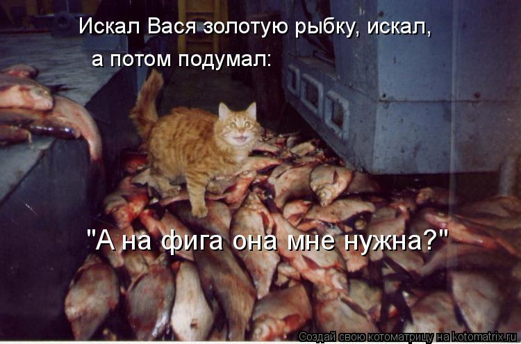 """Котоматрица: Искал Вася золотую рыбку, искал, а потом подумал: """"А на фига она мне нужна?"""""""