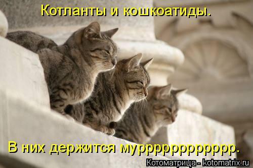 Котоматрица: Котланты и кошкоатиды. В них держится мурррррррррррр.