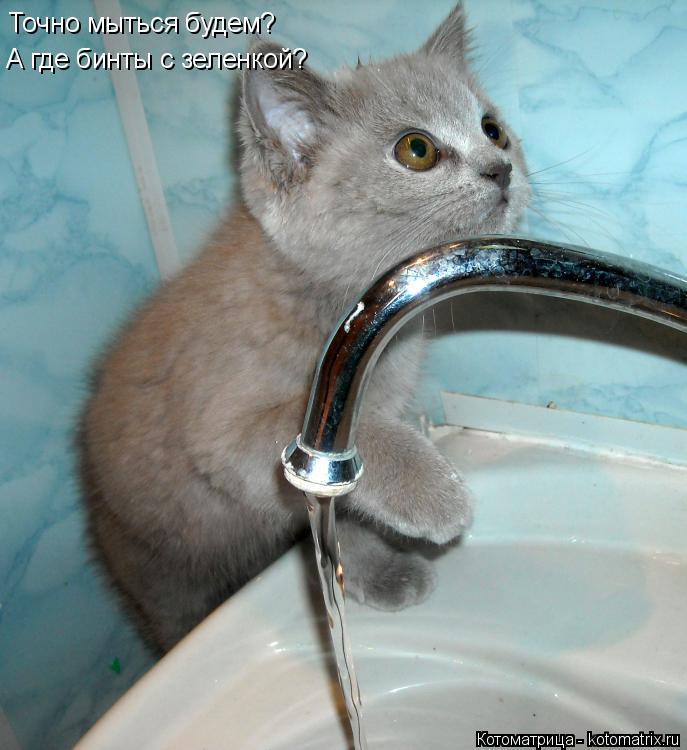 Котоматрица: Точно мыться будем? А где бинты с зеленкой?