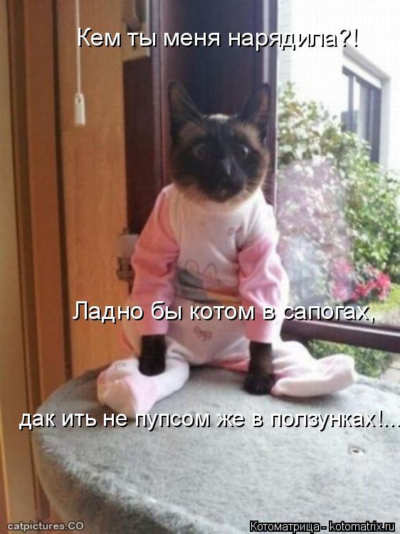Котоматрица: Кем ты меня нарядила?! Ладно бы котом в сапогах, дак ить не пупсом же в ползунках!... дак ить не пупсом же в ползунках!...