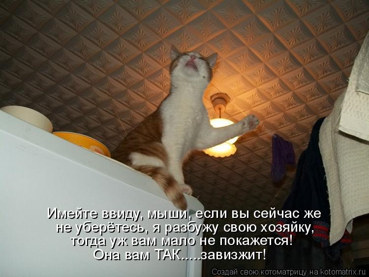 Котоматрица: Имейте ввиду, мыши, если вы сейчас же не уберётесь, я разбужу свою хозяйку, тогда уж вам мало не покажется! Она вам ТАК.....завизжит!