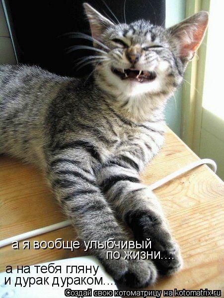 Котоматрица: а я вообще улыбчивый по жизни.... а на тебя гляну и дурак дураком....