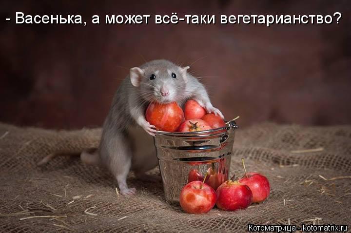 Котоматрица: - Васенька, а может всё-таки вегетарианство?