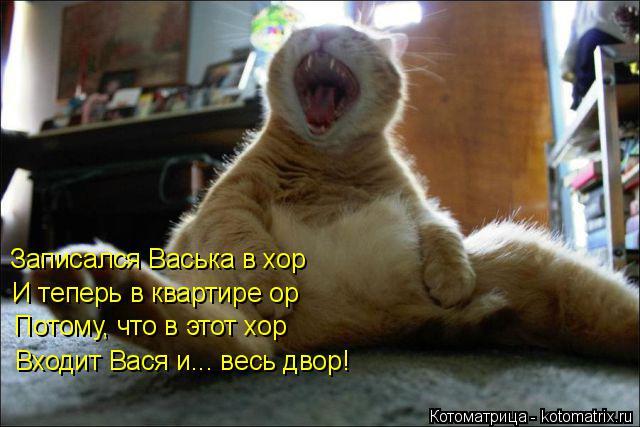 Котоматрица: Записался Васька в хор   И теперь в квартире ор  Потому, что в этот хор  Входит Вася и... весь двор!