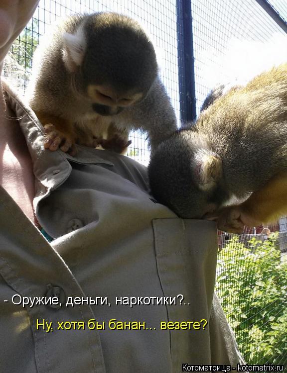 Котоматрица: - Оружие, деньги, наркотики?..  Ну, хотя бы банан... везете?