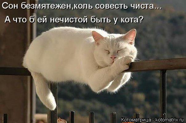 Котоматрица: Сон безмятежен,коль совесть чиста... А что б ей нечистой быть у кота?