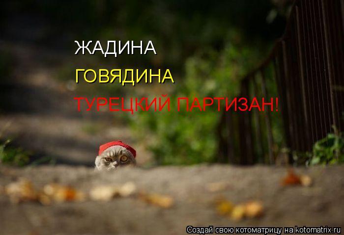 Котоматрица: ЖАДИНА ГОВЯДИНА ТУРЕЦКИЙ ПАРТИЗАН!